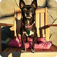 Adopt A Pet :: Minni - Vacaville, CA