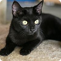 Adopt A Pet :: Raven - Columbia, TN