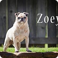 Adopt A Pet :: Zoey - Cordova, TN