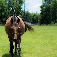 Adopt A Pet :: Nick - Hinesville, GA