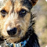 Adopt A Pet :: Benji TM - Schertz, TX