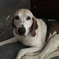 Adopt A Pet :: Lulu - Carmichael, CA