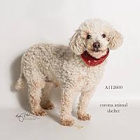 Adopt A Pet :: KENNEL 17 - Corona, CA