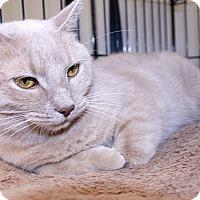 Adopt A Pet :: Baby Girl - Lumberton, NC