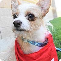 Adopt A Pet :: Zelda - Fayette, MO