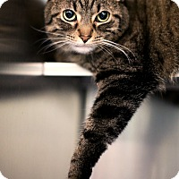 Adopt A Pet :: Pawz - Appleton, WI