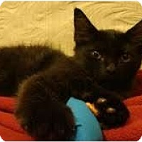 Adopt A Pet :: Fluffykins - Coral Springs, FL