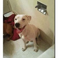 Adopt A Pet :: Taz - Geismar, LA