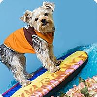 Adopt A Pet :: Polo - Baton Rouge, LA