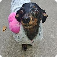 Adopt A Pet :: Ellie Mae - Vidor, TX