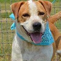 Adopt A Pet :: WALKER - Liverpool, TX