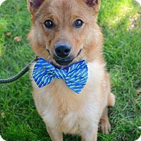 Adopt A Pet :: Finn - Rockaway, NJ