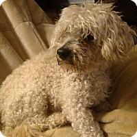 Adopt A Pet :: Magoo CJ in RI - Providence, RI