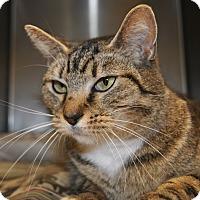 Adopt A Pet :: CB - Windsor, VA