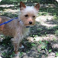 Adopt A Pet :: Lexie pending adoption - Manchester, CT