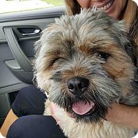 Adopt A Pet :: Ralph - Loudonville, NY