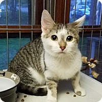 Adopt A Pet :: Rumer - Jeannette, PA