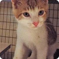 Adopt A Pet :: Banjo - Grants Pass, OR