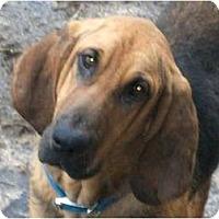 Adopt A Pet :: Kingston - Harrisburgh, PA