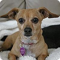 Adopt A Pet :: Chewy - Sacramento, CA