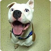 Adopt A Pet :: Mikey - Pittsbugh, PA