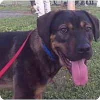 Adopt A Pet :: Gilbert - Fairfax, VA