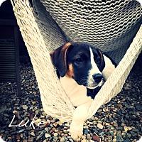 Adopt A Pet :: Luke - Southington, CT