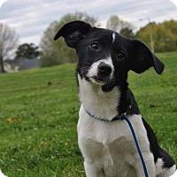 Adopt A Pet :: Pistachio - Bedminster, NJ