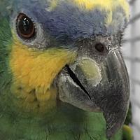Adopt A Pet :: Fritz - Villa Park, IL