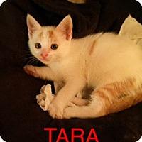 Adopt A Pet :: Tara - Brooklyn, NY