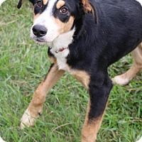 Adopt A Pet :: Rita - Austin, TX
