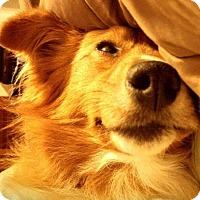 Adopt A Pet :: Chilo - East Thetford, VT