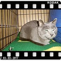 Adopt A Pet :: SMOKEY - Medford, WI
