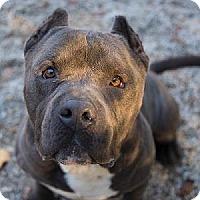 Adopt A Pet :: Boris - Decatur, GA