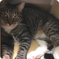 Adopt A Pet :: Franny - Buhl, ID