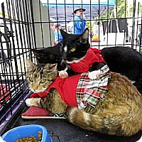 Adopt A Pet :: Hope Whylina - Harrisburg, NC