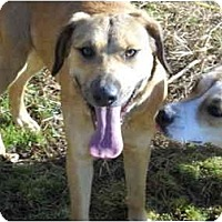 Adopt A Pet :: Melody - Glastonbury, CT