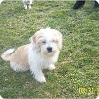 Adopt A Pet :: DUFFY - Rossford, OH