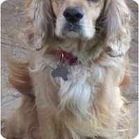 Adopt A Pet :: Burney - Sugarland, TX