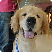 Adopt A Pet :: Doo Doo - Temple City, CA
