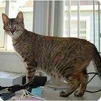 Adopt A Pet :: Evie - Davis, CA