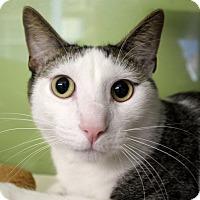 Adopt A Pet :: Shine - Chicago, IL