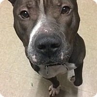 Adopt A Pet :: Hemingway - Richmond, VA