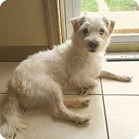 Adopt A Pet :: Whitey - New Oxford, PA