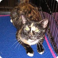 Adopt A Pet :: Saffron - Seminole, FL
