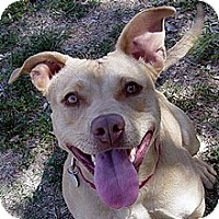 Adopt A Pet :: Autumn - Phoenix, AZ