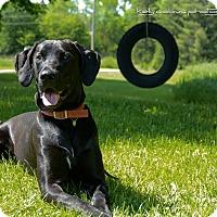 Adopt A Pet :: Blackie - Douglas, ON