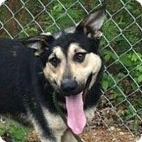 Adopt A Pet :: Caveman - Brattleboro, VT
