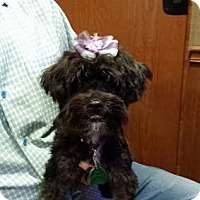 Adopt A Pet :: Rosita - Crystal River, FL
