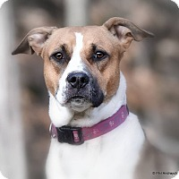 Adopt A Pet :: Danni - Westminster, MD